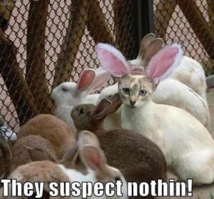 kattoflage