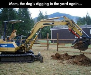 gräva
